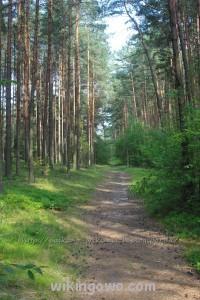 Piękny las nas otaczał