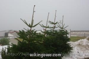 watermarked-IMGP5707